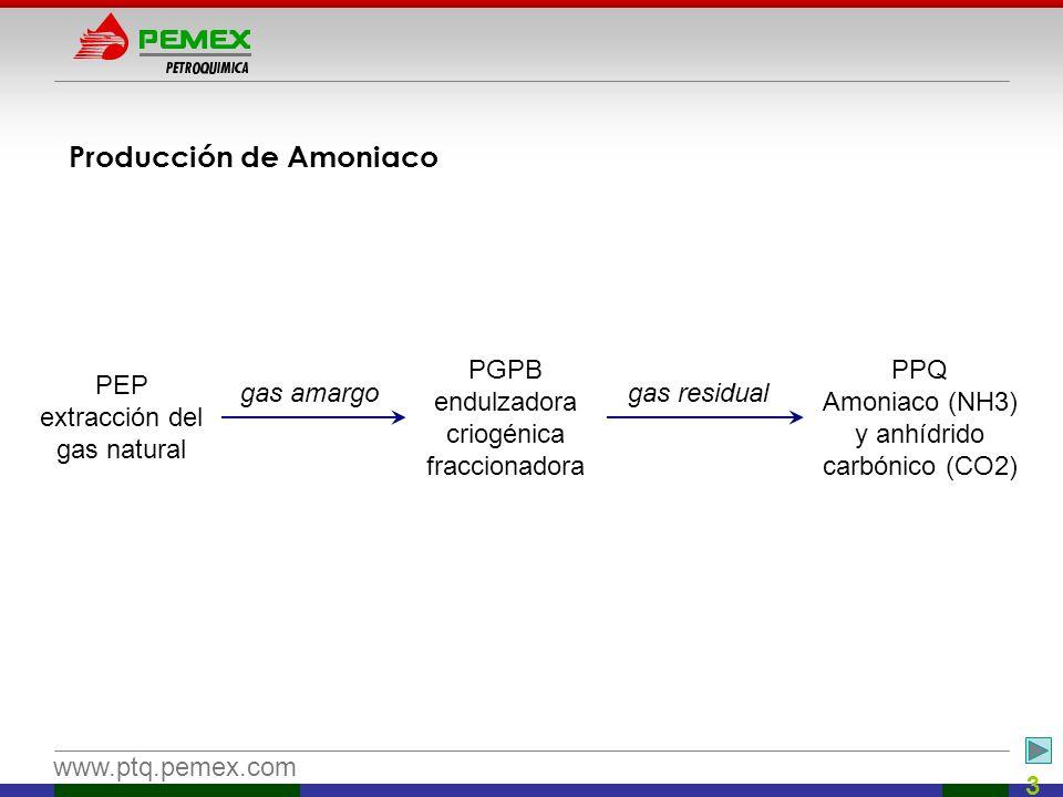 www.ptq.pemex.com 3 Producción de Amoniaco PEP extracción del gas natural PGPB endulzadora criogénica fraccionadora gas amargo PPQ Amoniaco (NH3) y an