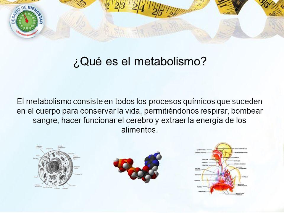 ¿Qué es el metabolismo? El metabolismo consiste en todos los procesos químicos que suceden en el cuerpo para conservar la vida, permitiéndonos respira