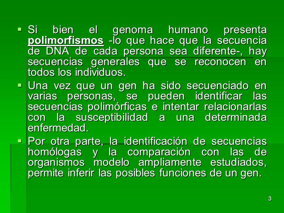 3 Si bien el genoma humano presenta polimorfismos -lo que hace que la secuencia de DNA de cada persona sea diferente-, hay secuencias generales que se
