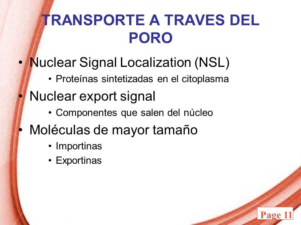 Powerpoint Templates Page 11 TRANSPORTE A TRAVES DEL PORO Nuclear Signal Localization (NSL) Proteínas sintetizadas en el citoplasma Nuclear export sig
