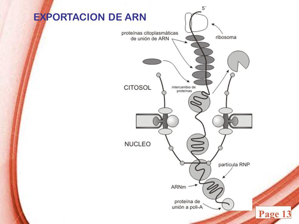 Powerpoint Templates Page 13 EXPORTACION DE ARN