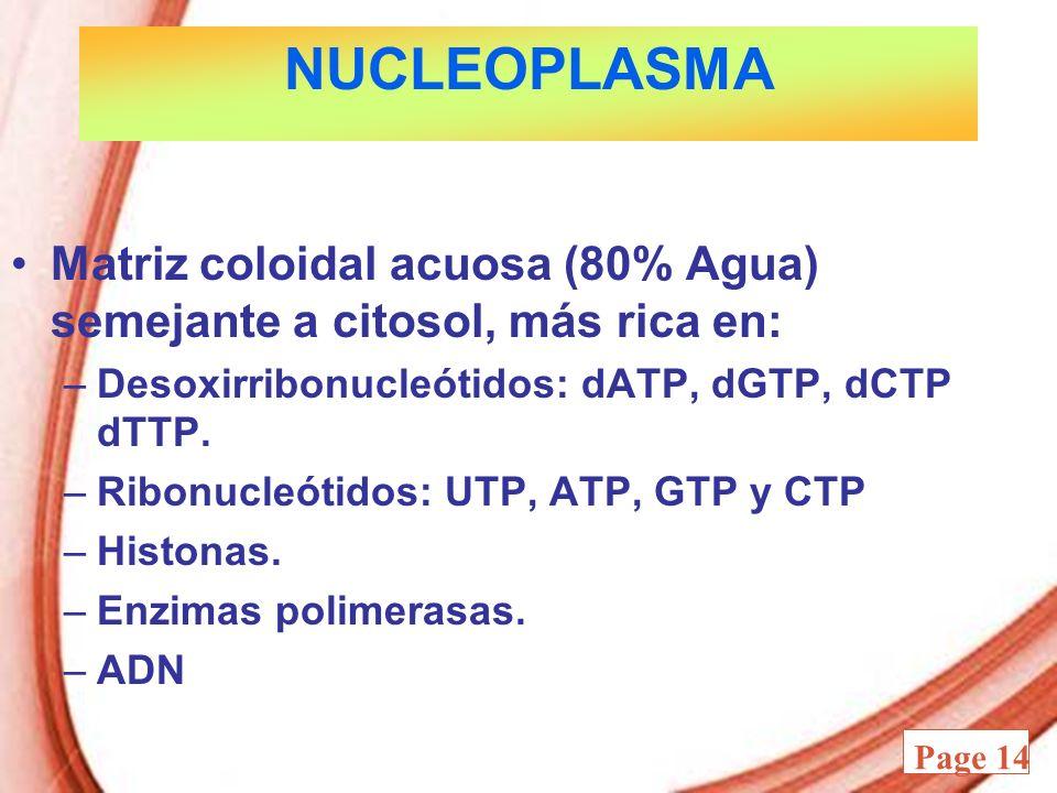 Powerpoint Templates Page 14 NUCLEOPLASMA Matriz coloidal acuosa (80% Agua) semejante a citosol, más rica en: –Desoxirribonucleótidos: dATP, dGTP, dCT