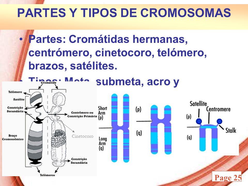 Powerpoint Templates Page 25 PARTES Y TIPOS DE CROMOSOMAS Partes: Cromátidas hermanas, centrómero, cinetocoro, telómero, brazos, satélites. Tipos: Met