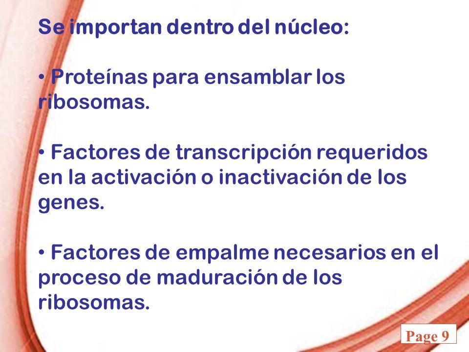 Powerpoint Templates Page 9 Se importan dentro del núcleo: Proteínas para ensamblar los ribosomas. Factores de transcripción requeridos en la activaci