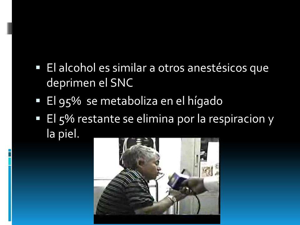El alcohol es similar a otros anestésicos que deprimen el SNC El 95% se metaboliza en el hígado El 5% restante se elimina por la respiracion y la piel