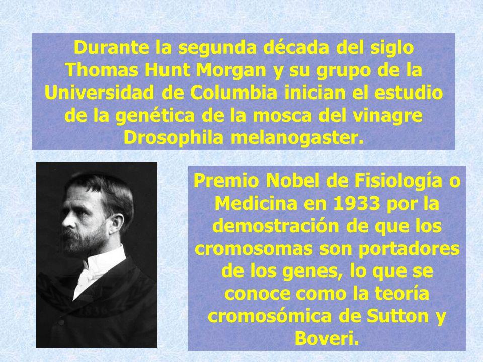 Durante la segunda década del siglo Thomas Hunt Morgan y su grupo de la Universidad de Columbia inician el estudio de la genética de la mosca del vina