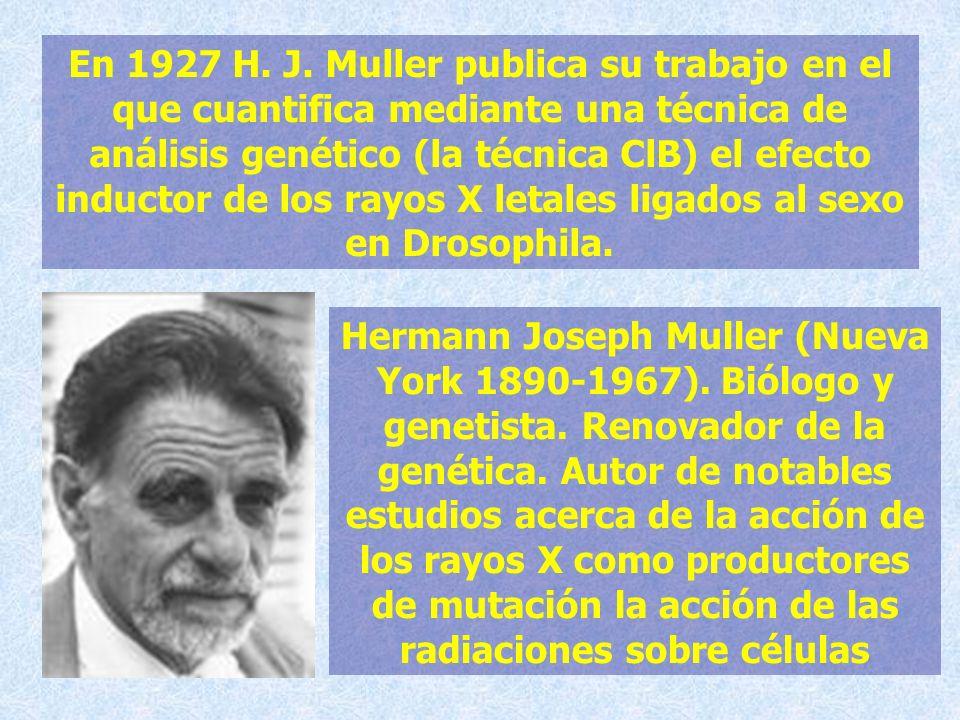 En 1927 H. J. Muller publica su trabajo en el que cuantifica mediante una técnica de análisis genético (la técnica ClB) el efecto inductor de los rayo