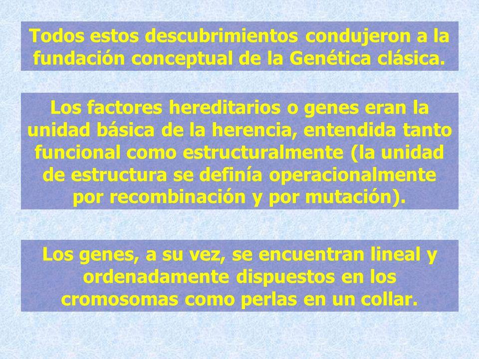 Todos estos descubrimientos condujeron a la fundación conceptual de la Genética clásica. Los factores hereditarios o genes eran la unidad básica de la