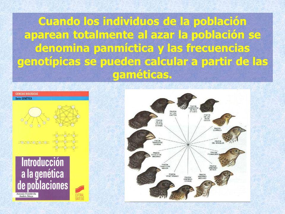 Cuando los individuos de la población aparean totalmente al azar la población se denomina panmíctica y las frecuencias genotípicas se pueden calcular