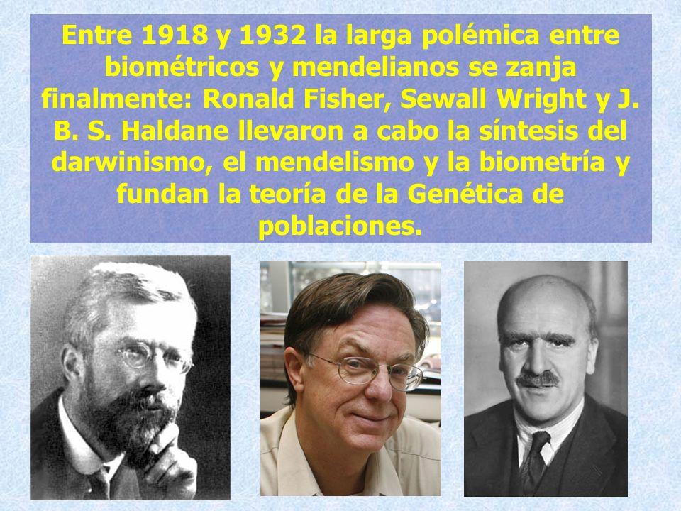 Entre 1918 y 1932 la larga polémica entre biométricos y mendelianos se zanja finalmente: Ronald Fisher, Sewall Wright y J. B. S. Haldane llevaron a ca
