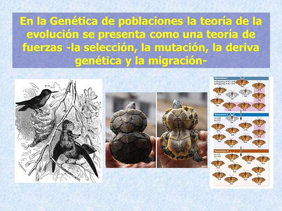 En la Genética de poblaciones la teoría de la evolución se presenta como una teoría de fuerzas -la selección, la mutación, la deriva genética y la mig