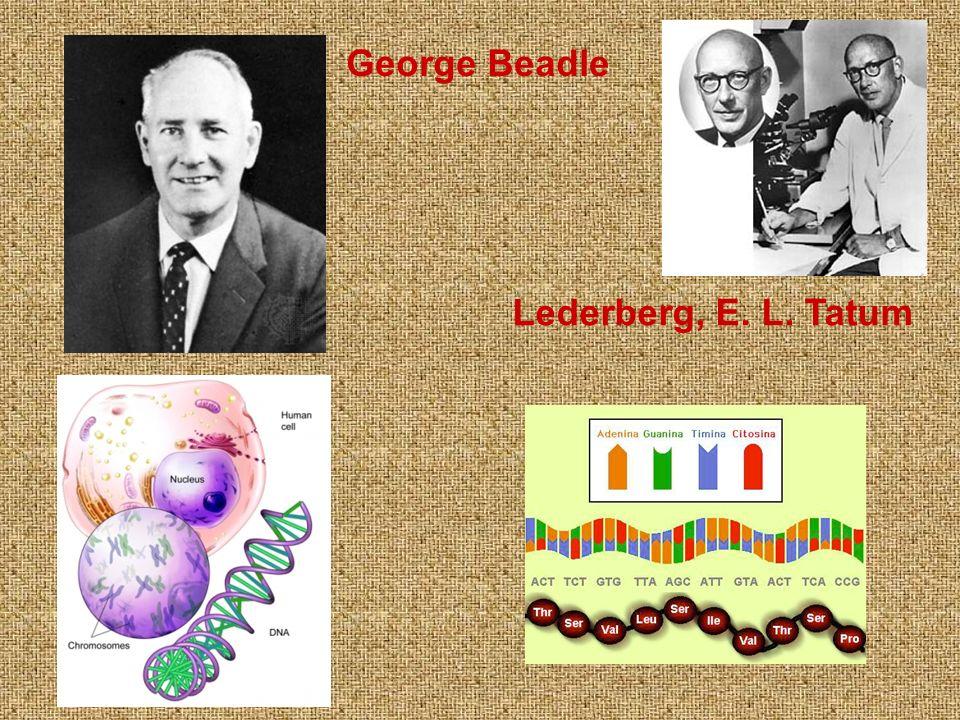 George Beadle Lederberg, E. L. Tatum