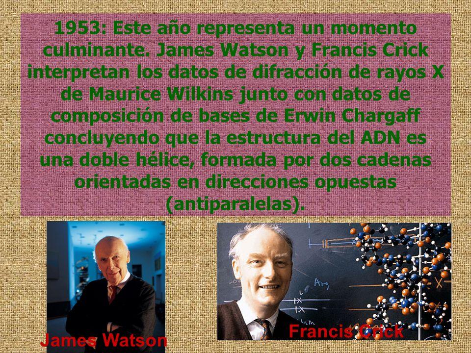 1953: Este año representa un momento culminante. James Watson y Francis Crick interpretan los datos de difracción de rayos X de Maurice Wilkins junto
