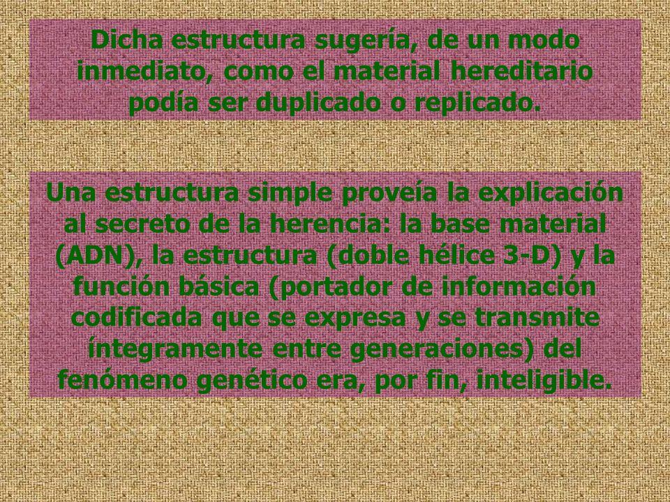 Dicha estructura sugería, de un modo inmediato, como el material hereditario podía ser duplicado o replicado. Una estructura simple proveía la explica