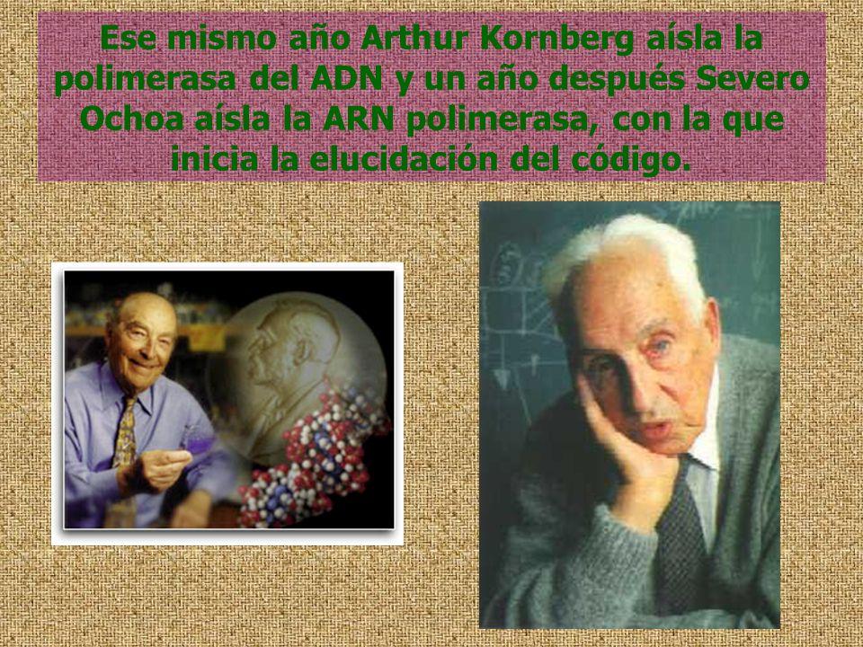 Ese mismo año Arthur Kornberg aísla la polimerasa del ADN y un año después Severo Ochoa aísla la ARN polimerasa, con la que inicia la elucidación del
