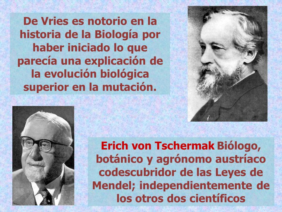 De Vries es notorio en la historia de la Biología por haber iniciado lo que parecía una explicación de la evolución biológica superior en la mutación.
