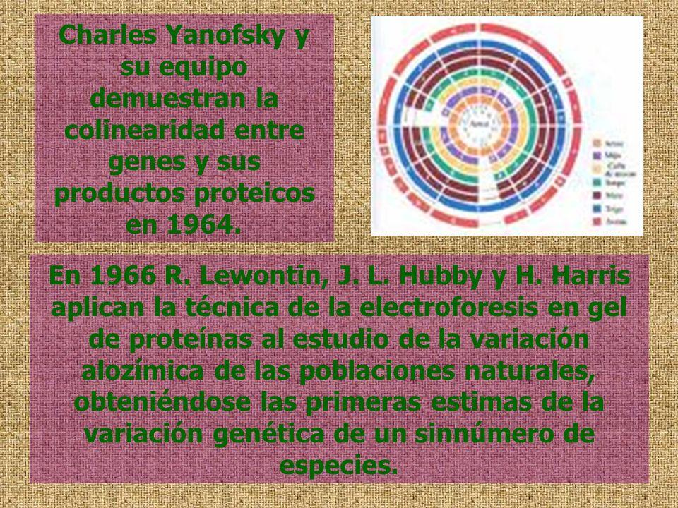 En 1966 R. Lewontin, J. L. Hubby y H. Harris aplican la técnica de la electroforesis en gel de proteínas al estudio de la variación alozímica de las p