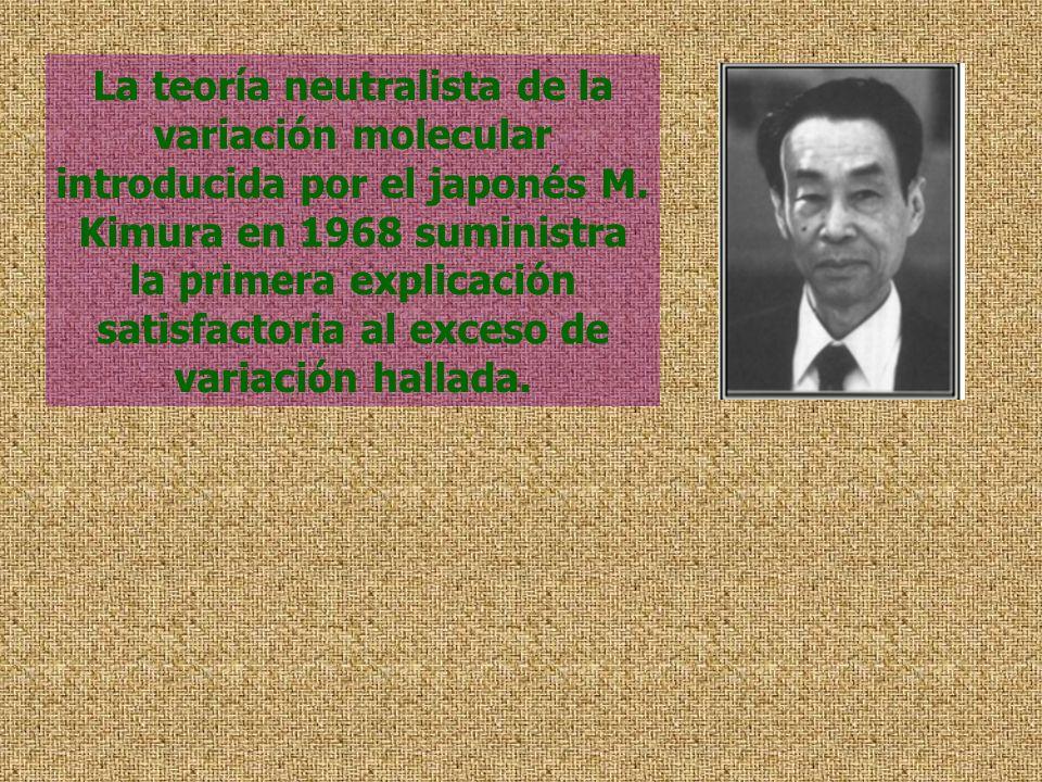 La teoría neutralista de la variación molecular introducida por el japonés M. Kimura en 1968 suministra la primera explicación satisfactoria al exceso