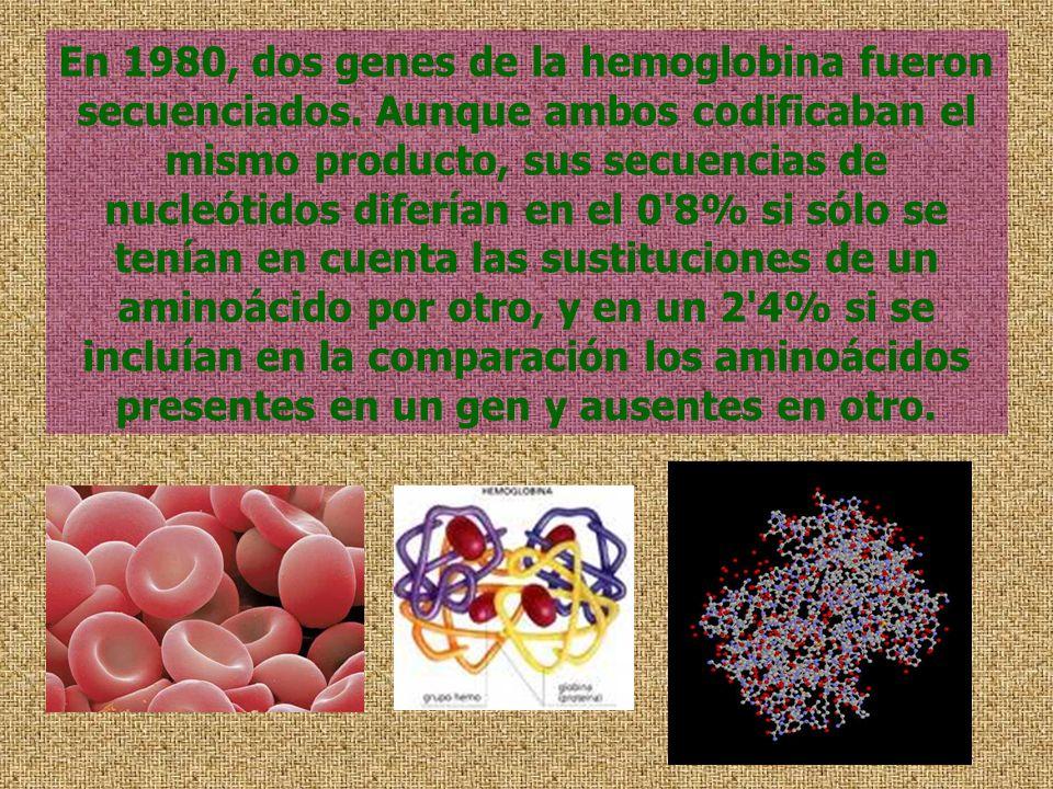 En 1980, dos genes de la hemoglobina fueron secuenciados. Aunque ambos codificaban el mismo producto, sus secuencias de nucleótidos diferían en el 0'8