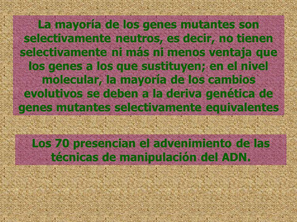 La mayoría de los genes mutantes son selectivamente neutros, es decir, no tienen selectivamente ni más ni menos ventaja que los genes a los que sustit