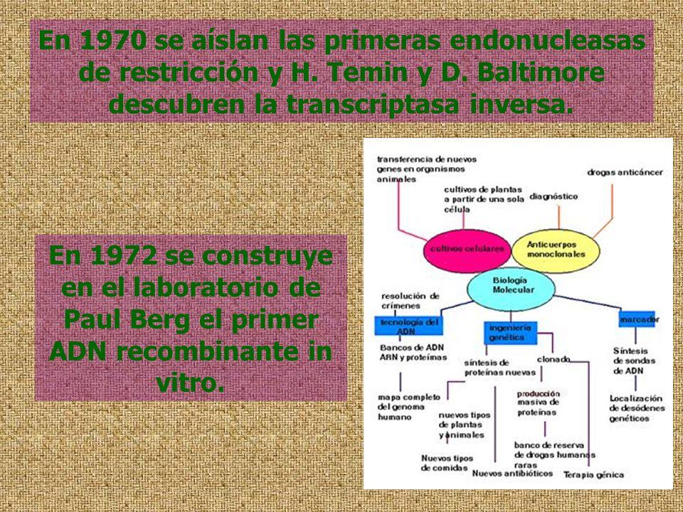En 1970 se aíslan las primeras endonucleasas de restricción y H. Temin y D. Baltimore descubren la transcriptasa inversa. En 1972 se construye en el l