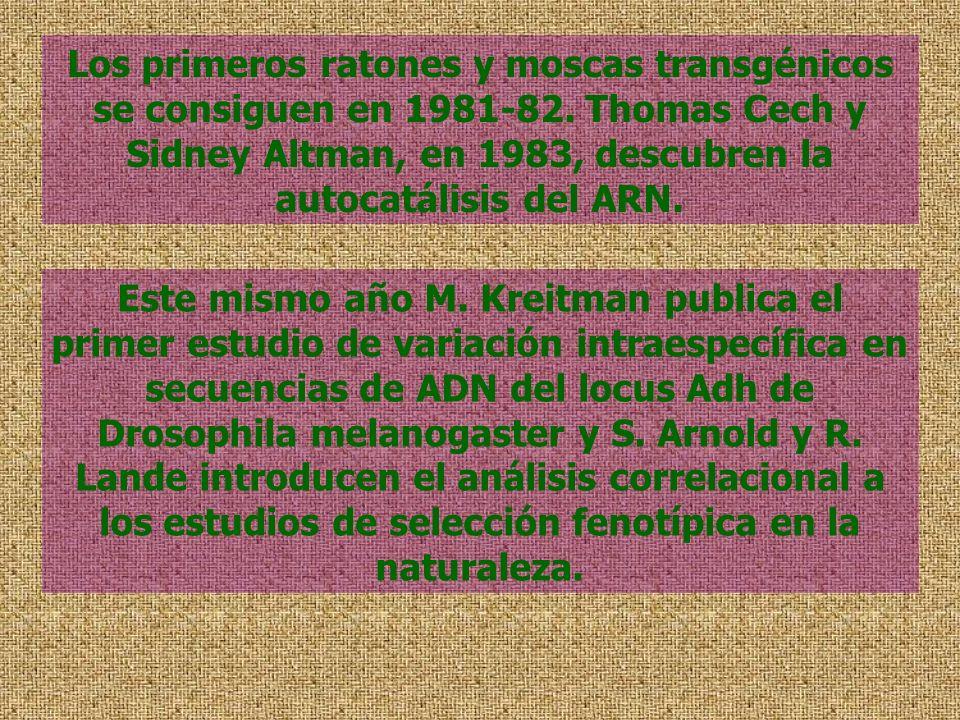 Los primeros ratones y moscas transgénicos se consiguen en 1981-82. Thomas Cech y Sidney Altman, en 1983, descubren la autocatálisis del ARN. Este mis
