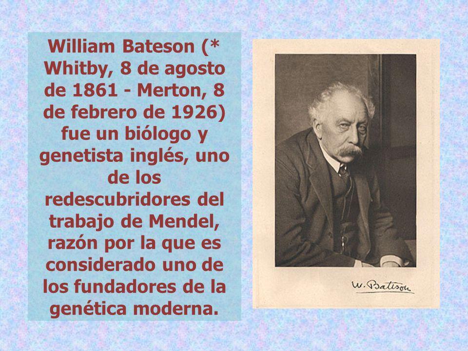 William Bateson (* Whitby, 8 de agosto de 1861 - Merton, 8 de febrero de 1926) fue un biólogo y genetista inglés, uno de los redescubridores del traba