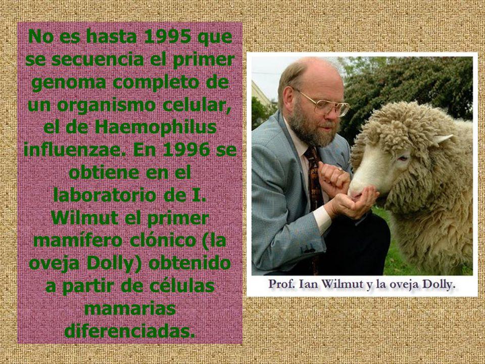 No es hasta 1995 que se secuencia el primer genoma completo de un organismo celular, el de Haemophilus influenzae. En 1996 se obtiene en el laboratori