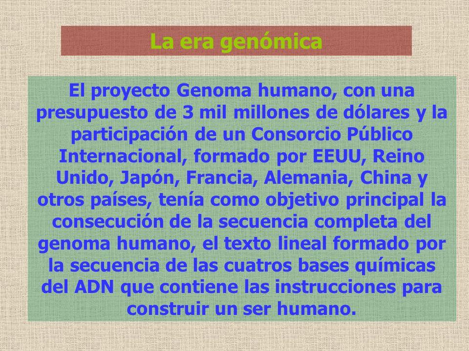 La era genómica El proyecto Genoma humano, con una presupuesto de 3 mil millones de dólares y la participación de un Consorcio Público Internacional,