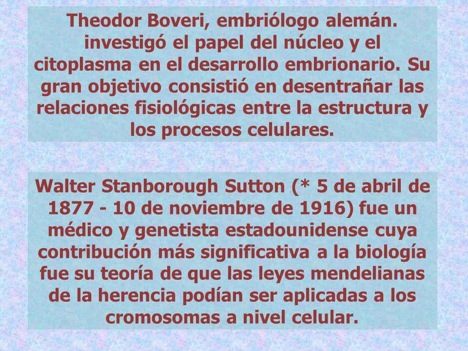 Theodor Boveri, embriólogo alemán. investigó el papel del núcleo y el citoplasma en el desarrollo embrionario. Su gran objetivo consistió en desentrañ