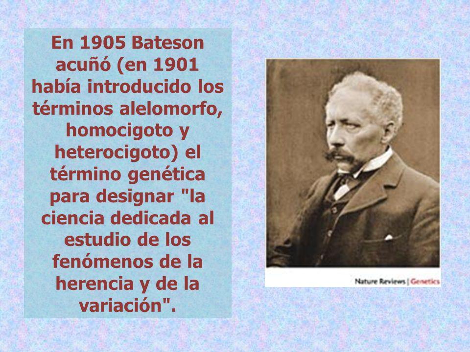 En 1905 Bateson acuñó (en 1901 había introducido los términos alelomorfo, homocigoto y heterocigoto) el término genética para designar