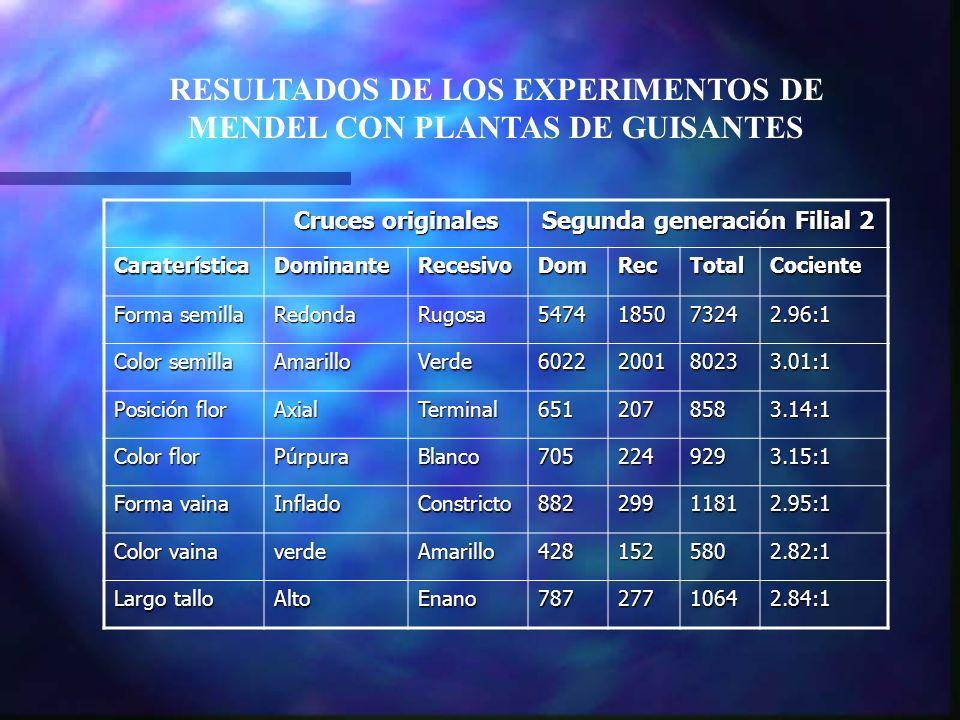 RESULTADOS DE LOS EXPERIMENTOS DE MENDEL CON PLANTAS DE GUISANTES Cruces originales Segunda generación Filial 2 CaraterísticaDominanteRecesivoDomRecTo
