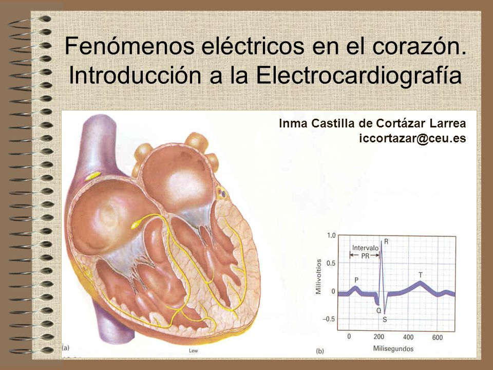 Fenómenos eléctricos en el corazón. Introducción a la Electrocardiografía Inma Castilla de Cortázar Larrea iccortazar@ceu.es