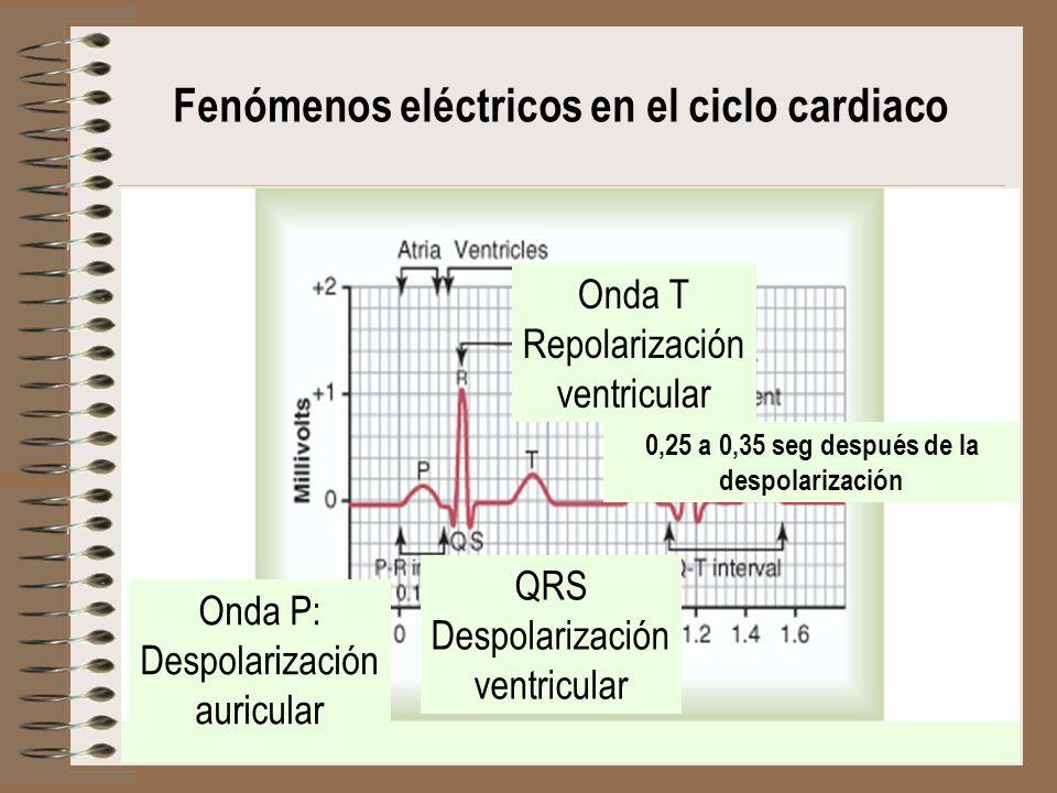 Fenómenos eléctricos en el ciclo cardiaco Onda P: Despolarización auricular QRS Despolarización ventricular Onda T Repolarización ventricular 0,25 a 0