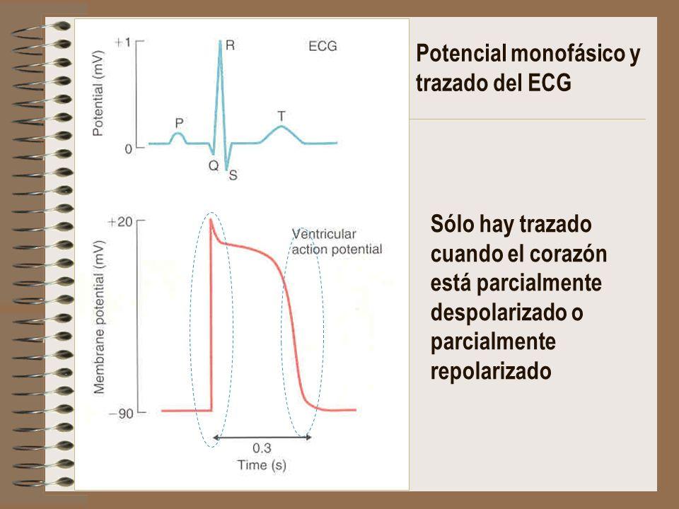 Potencial monofásico y trazado del ECG Sólo hay trazado cuando el corazón está parcialmente despolarizado o parcialmente repolarizado