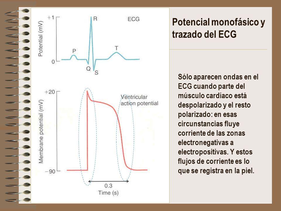 Potencial monofásico y trazado del ECG Sólo aparecen ondas en el ECG cuando parte del músculo cardíaco está despolarizado y el resto polarizado: en es