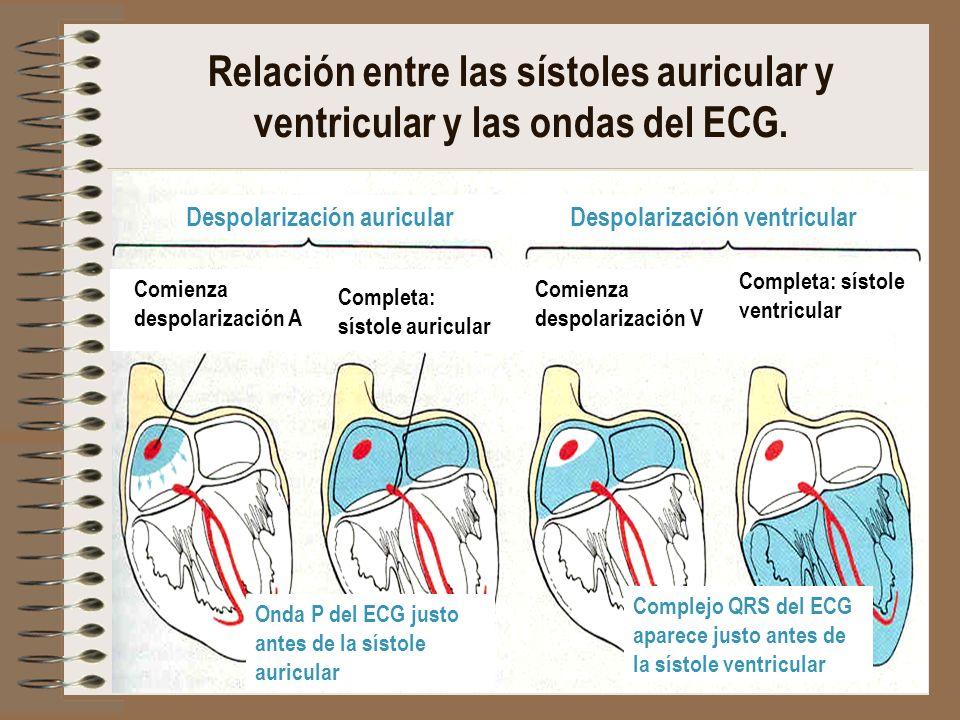 Despolarización auricularDespolarización ventricular Comienza despolarización A Completa: sístole auricular Comienza despolarización V Completa: sísto