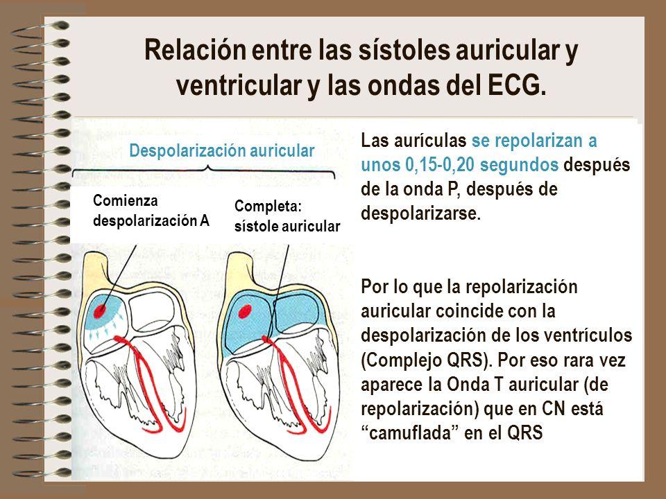 Despolarización auricular Comienza despolarización A Completa: sístole auricular Comienza despolarización V Completa: sístole ventricular Relación ent