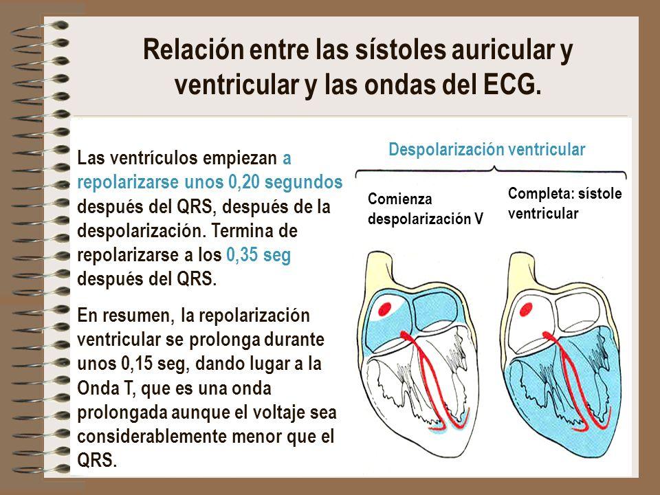 Despolarización ventricular Comienza despolarización A Completa: sístole auricular Comienza despolarización V Completa: sístole ventricular Relación e