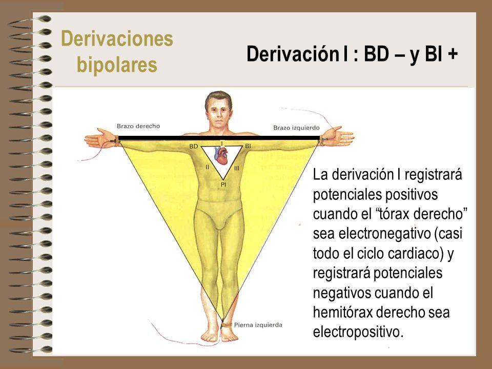 Derivaciones bipolares Derivación I : BD – y BI + La derivación I registrará potenciales positivos cuando el tórax derecho sea electronegativo (casi t