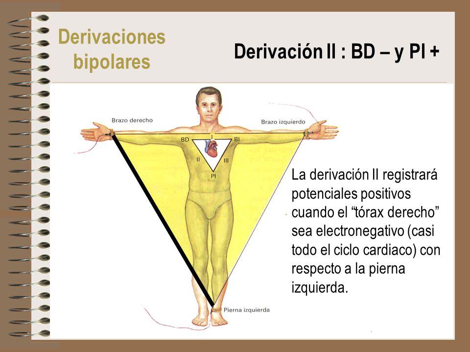 Derivaciones bipolares Derivación II : BD – y PI + La derivación II registrará potenciales positivos cuando el tórax derecho sea electronegativo (casi