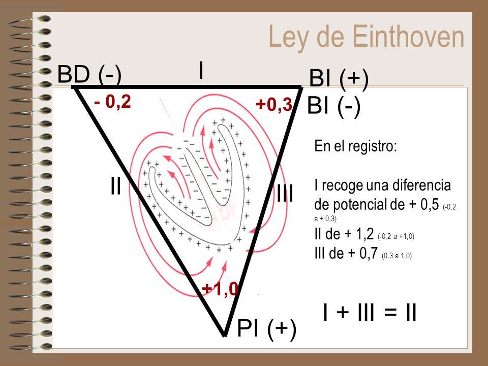 Ley de Einthoven I + III = II En el registro: I recoge una diferencia de potencial de + 0,5 (-0,2 a + 0,3) II de + 1,2 (-0,2 a +1,0) III de + 0,7 (0,3