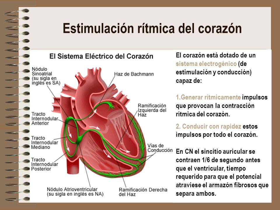 Estimulación rítmica del corazón El corazón está dotado de un sistema electrogénico (de estimulación y conducción) capaz de: 1.Generar rítmicamente im