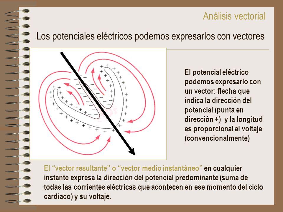Los potenciales eléctricos podemos expresarlos con vectores El potencial eléctrico podemos expresarlo con un vector: flecha que indica la dirección de