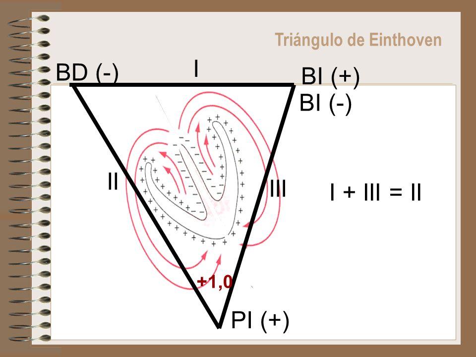 Triángulo de Einthoven I + III = II BD (-) BI (+) BI (-) PI (+) +1,0 I II III