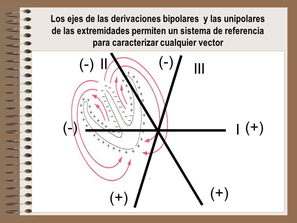 Los ejes de las derivaciones bipolares y las unipolares de las extremidades permiten un sistema de referencia para caracterizar cualquier vector (-) I