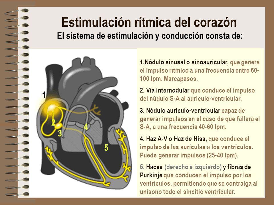 Estimulación rítmica del corazón El sistema de estimulación y conducción consta de: 1.Nódulo sinusal o sinoauricular, que genera el impulso rítmico a