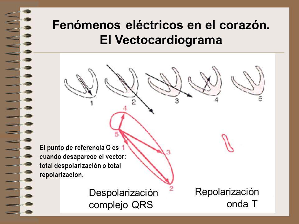 Despolarización complejo QRS Repolarización onda T Fenómenos eléctricos en el corazón. El Vectocardiograma El punto de referencia O es cuando desapare