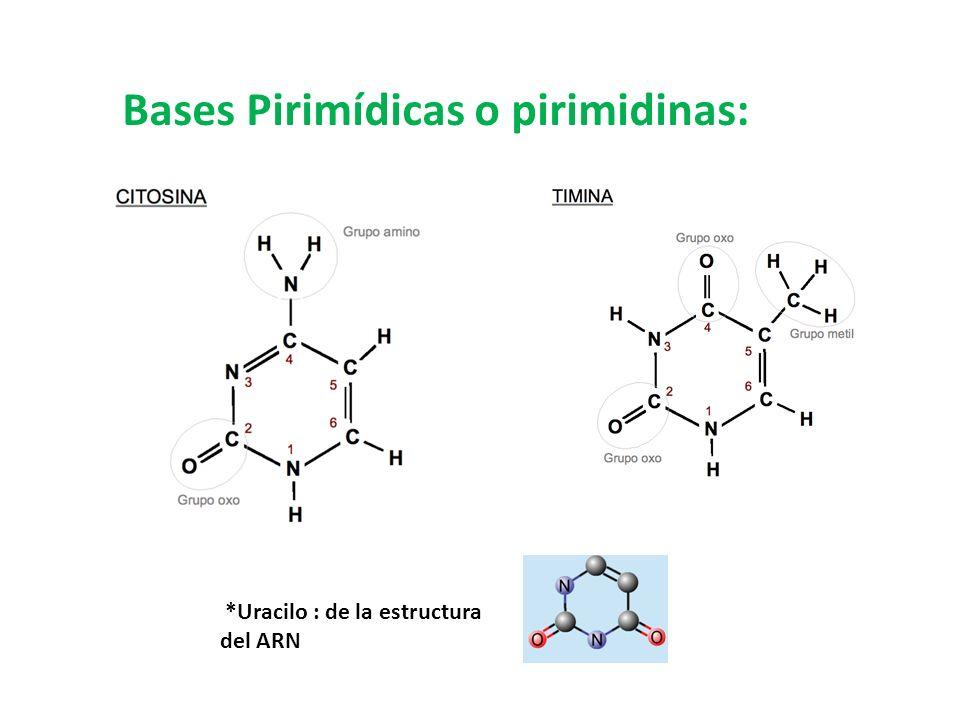 Bases Pirimídicas o pirimidinas: *Uracilo : de la estructura del ARN