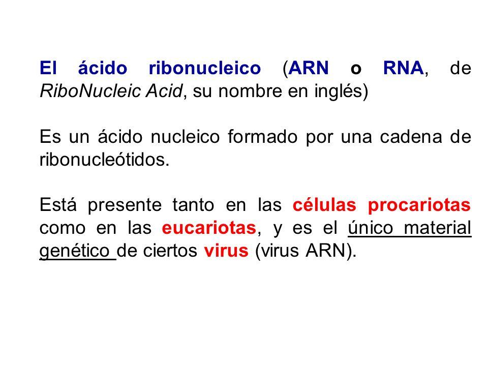El ácido ribonucleico (ARN o RNA, de RiboNucleic Acid, su nombre en inglés) Es un ácido nucleico formado por una cadena de ribonucleótidos. Está prese
